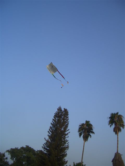 עפיפונים 2007
